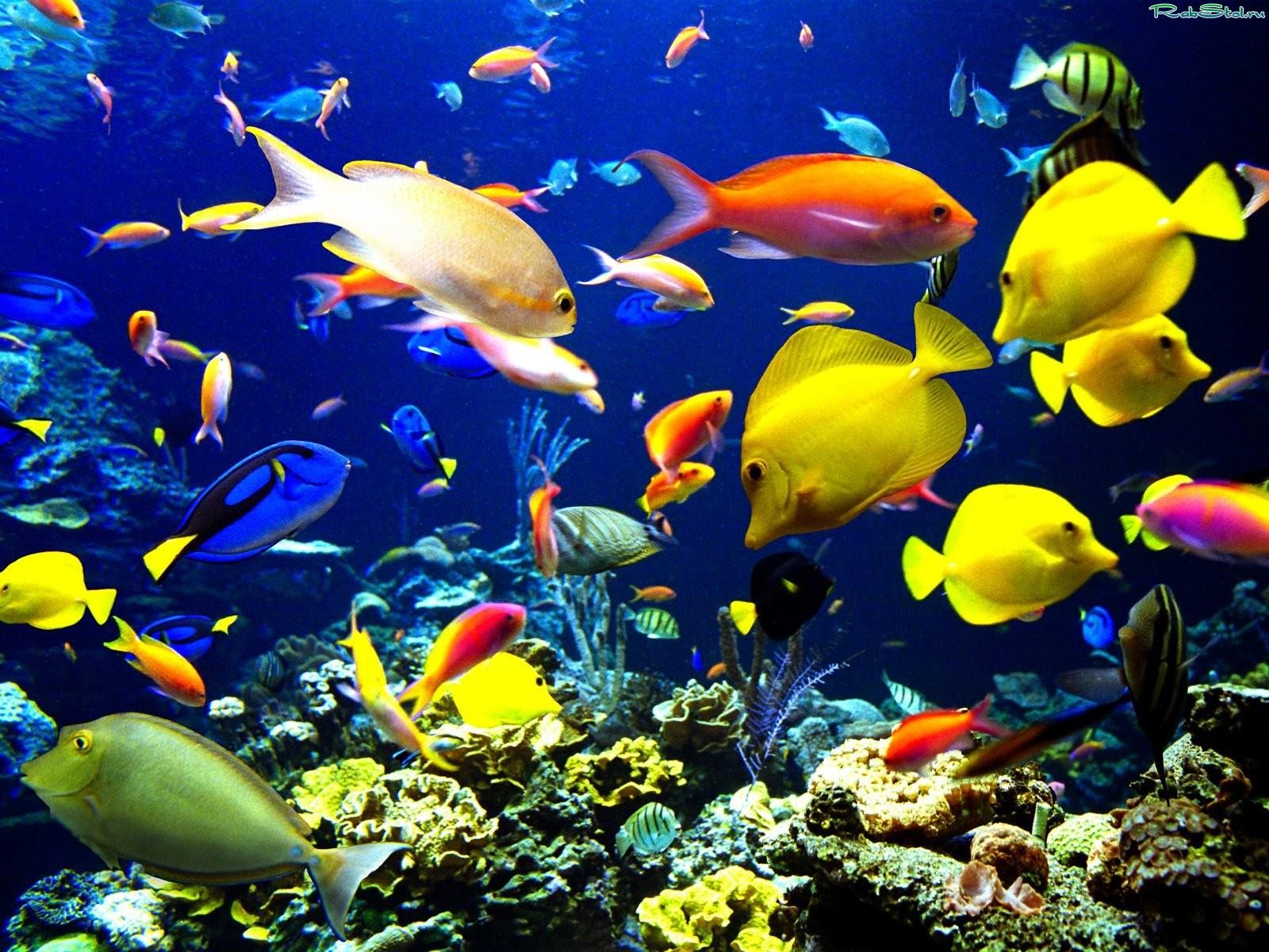 Картинка рыбы в аквариуме - d